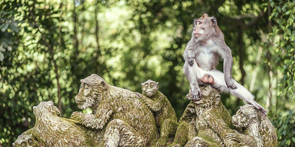 UBUD foret singe monkey forest