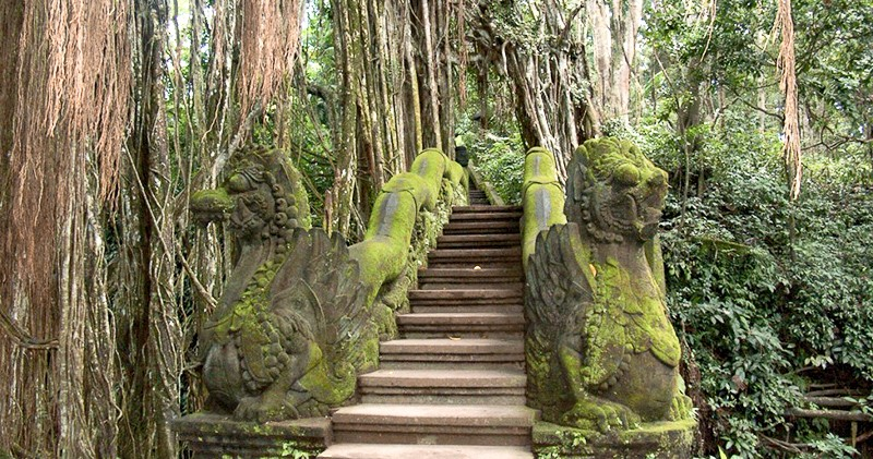foret singe monkey forest