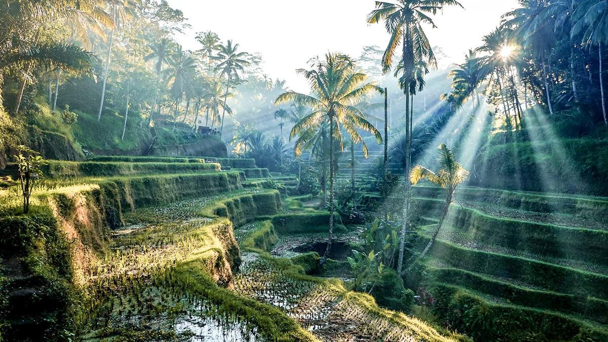 Visiter Ubud, le paradis tropical de Bali - FMR Blog Voyage