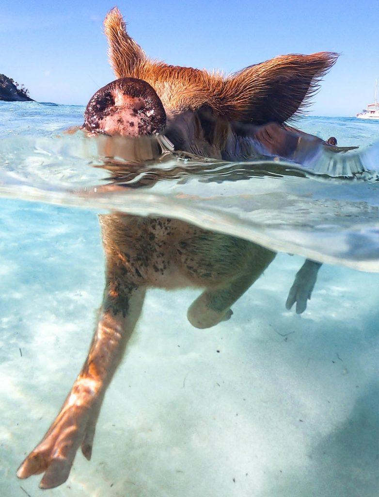 PIG ISLAND BAHAMAS - Ile aux cochons exumas - FMR blogvoyage